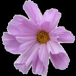fleurard